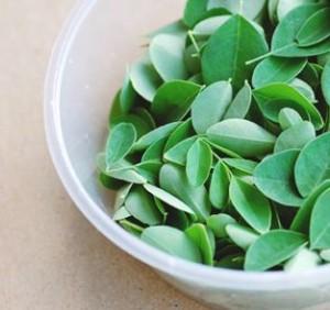 Les feuilles fraîches de moringa bio contiennent par gramme 3 fois plus de fer que les épinards.
