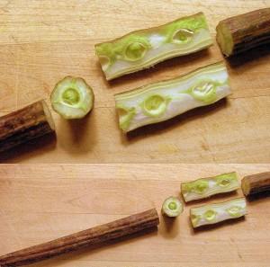 Voici le fruit de moringa bio, mais c'est les feuilles qui sont consommées