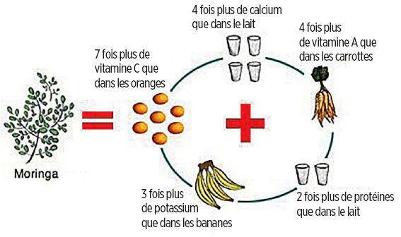 Valeurs nutritive du moringa biologique