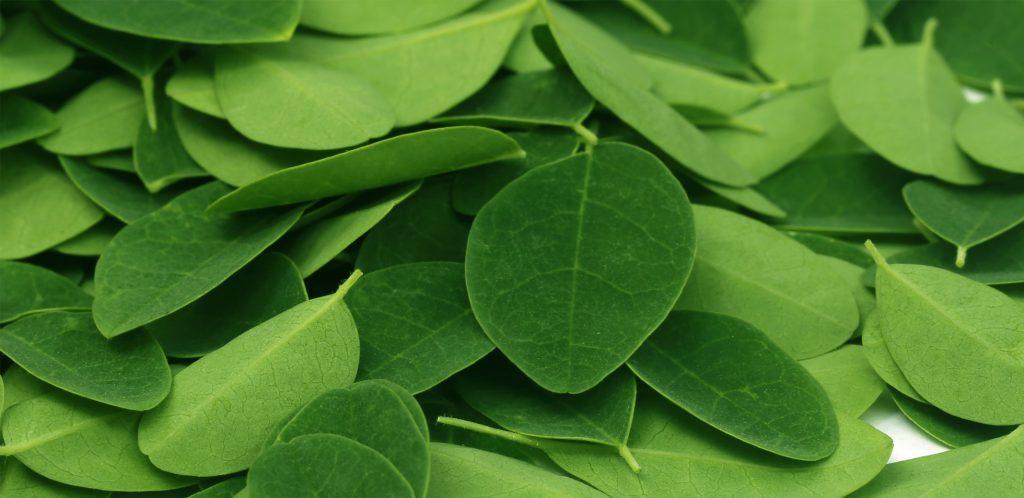Acheter de la poudre de moringa bio sur la boutique en ligne biologiquement.com