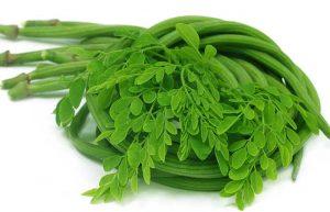 Moringa Concentré Naturel de Vie est un complément alimentaire BIO à base de poudre de feuilles de Moringa